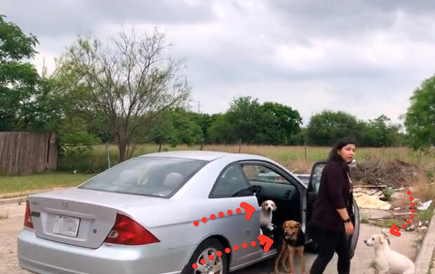 Машина остановилась на окраине и из нее вышла женщина и четыре собаки. В то, что было дальше, не хочется верить
