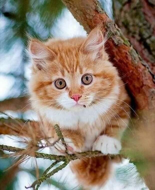 Котики, которые заставят вас улыбнуться