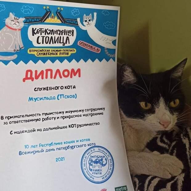 «Диплом служебного кота» вручили кошке псковских археологов