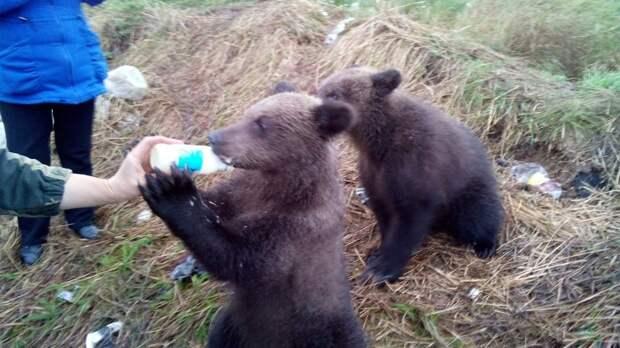 молочная поддержка животные, прикол, путешествия