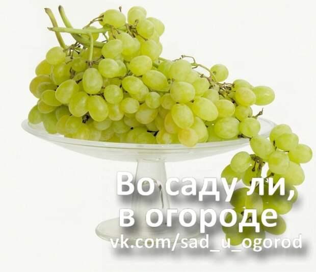Пестициды и виноград