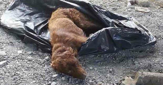 Туристки увидели пакет, лежащий на дороге… Вдруг он зашевелился и раздался жалобный плач!