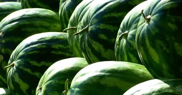 Казахстан и Таджикистан обсуждают создание «зеленого» коридора для пищевой продукции