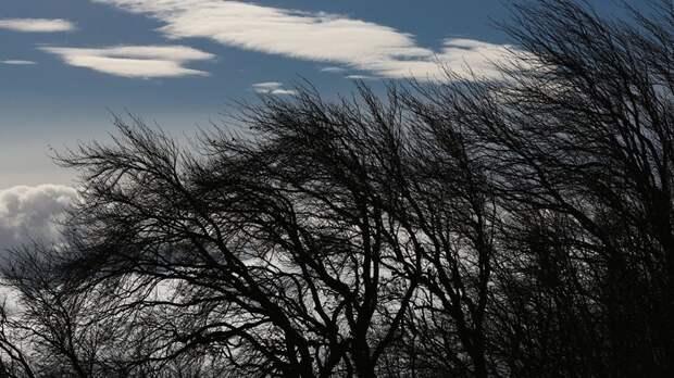 Синоптики предупредили об усилении ветра до 16 м/с в Татарстане