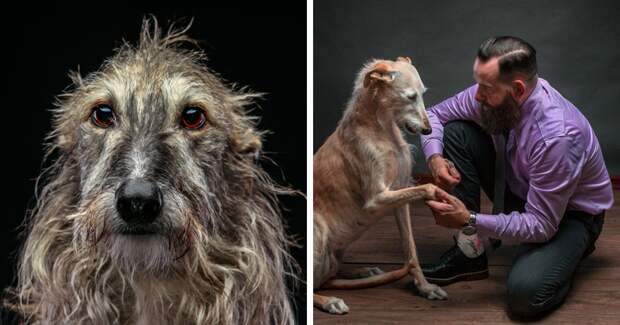 Фотографии собак, брошенных испанцами после окончания сезона охоты Порода, борзая, гальго, животные, испания, собака, спасение, фотография
