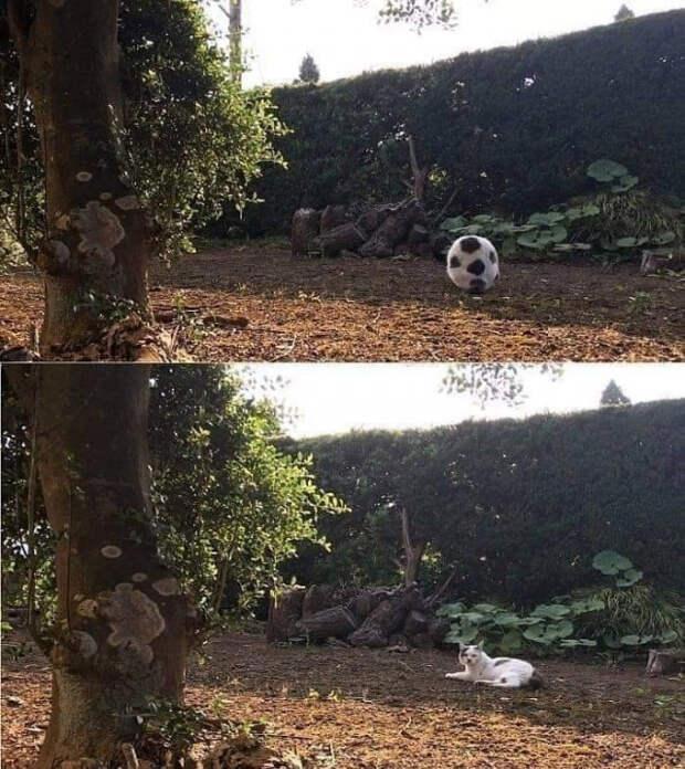 Фотографии с животными, которые должен увидеть каждый
