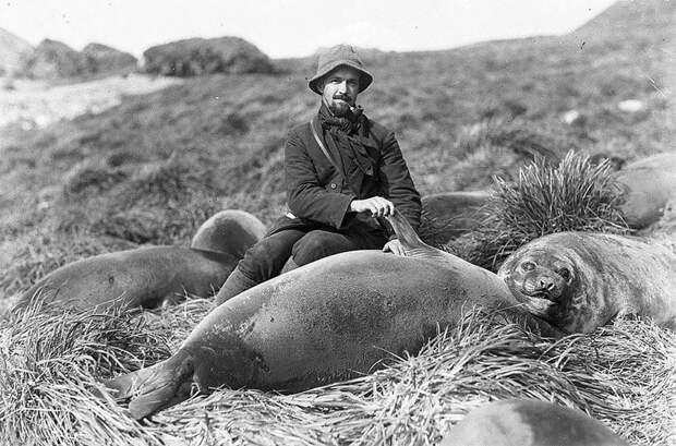 Артур Сойер и детеныш морского слона, приблизительно 1912 год Австралийская антарктическая экспедиция, антарктида, исследование, мир, путешествие, фотография, экспедиция
