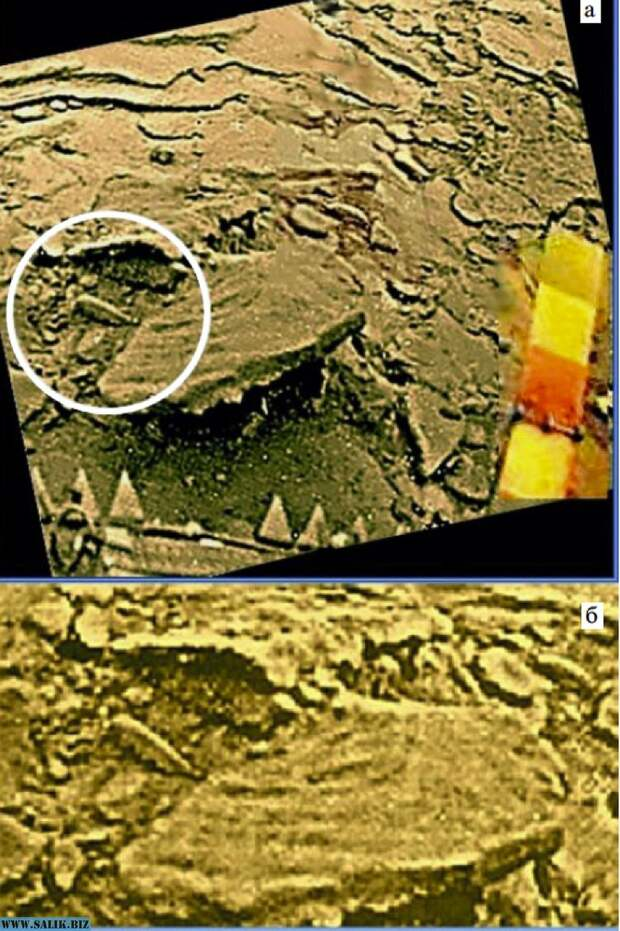 Каракатица - на Земле водятся похожие.