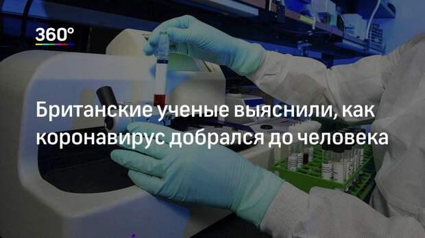 Британские ученые выяснили, как коронавирус добрался до человека