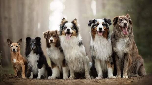 И в горе, и в радости: породы собак, которые проживут дольше других