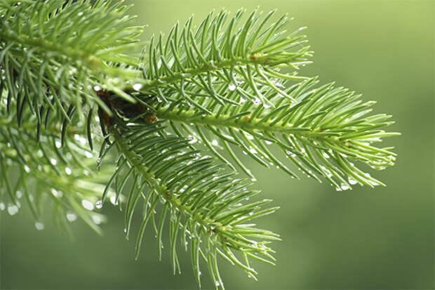 Новогодние лайфхаки: 4 способа пустить вдело осыпавшуюся хвою
