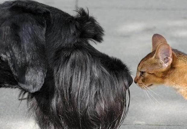 Как наш пес помог коту завоевать даму сердца. Смеялась до слез!