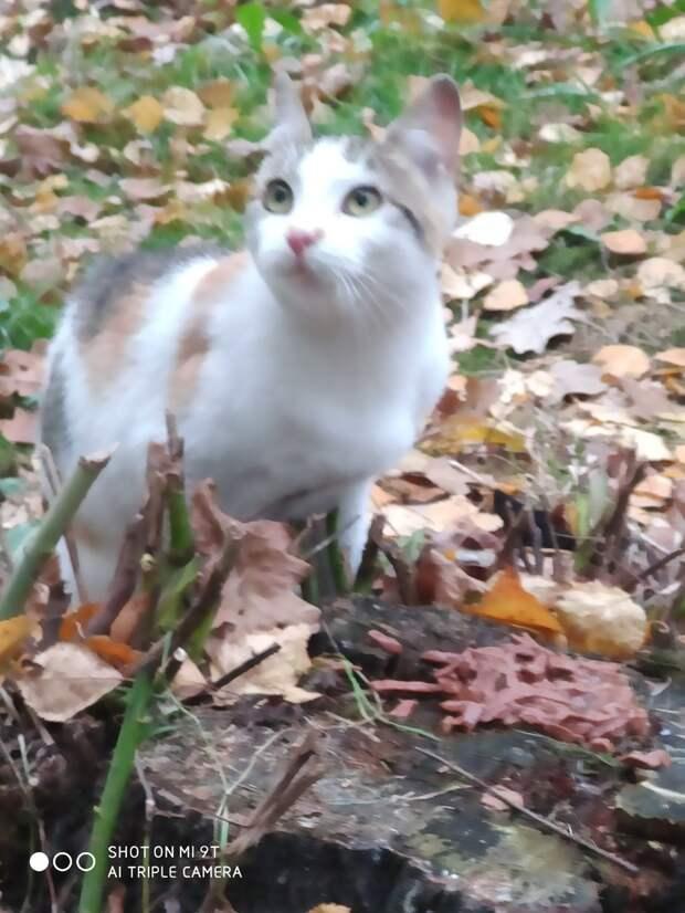 Пожалуйста, помогите!!! Замуровали жильё для всех местных бездомышей - и взрослых, и котят.....
