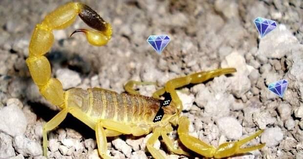Самая дорогая жидкость вмире: яджелтого скорпиона за760 миллионов рублей