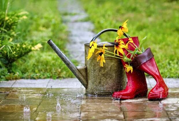 Пошли дожди – болезни жди