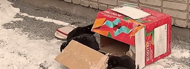 Машинист не ожидал обнаружить брошенных щенков на рельсах