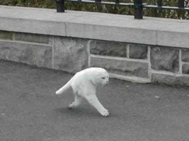 Кот урезанный