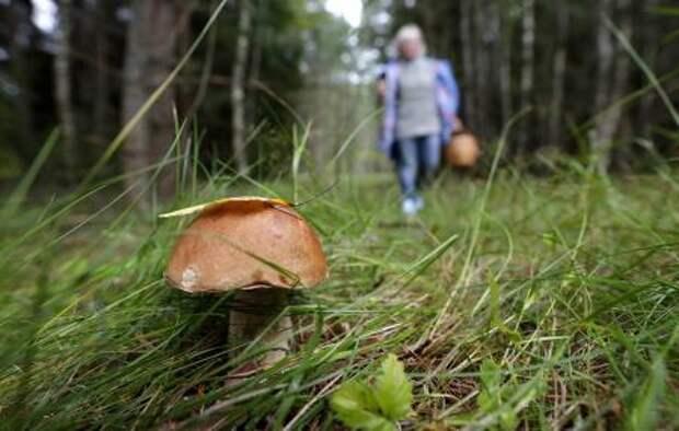 Минприроды опровергло информацию об ужесточении правил сбора грибов и ягод