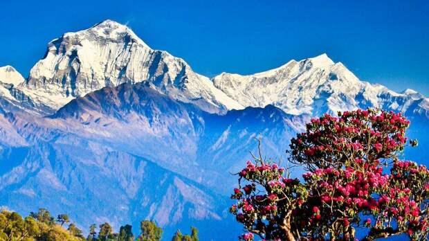 Ученые обнаружили в Гималаях сейсмоопасный разлом