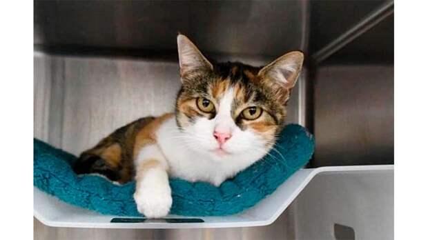 Кошка, которая «погибла» во время наводнения, вернулась живой спустя три года