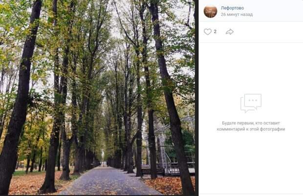 Фото дня: осенние листья шумят и шумят… в Лефортовском парке