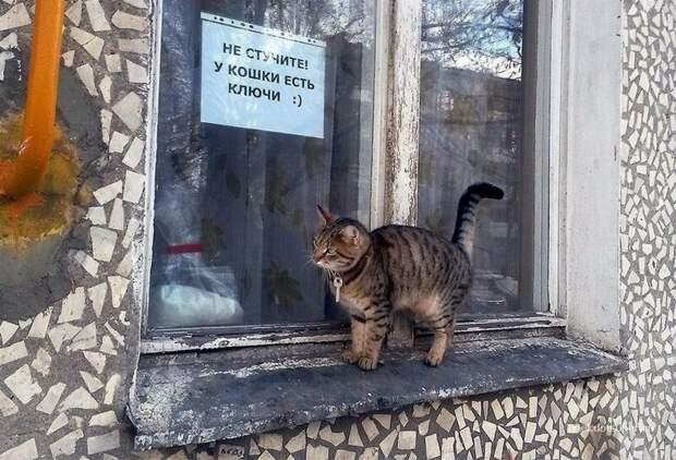 Кошка - воспитанница Куклачева? Российская действительность, абсурд, забавно, и смех и грех, россия, юмор