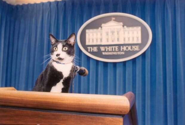 Почему Трампу нужно срочно завести котика? сша, белый дом, трамп