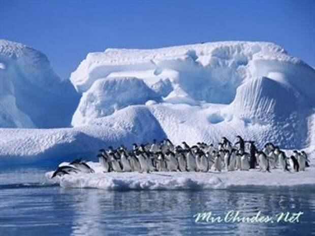 Антаркти́да! 5 заблуждений, в которые верят все люди