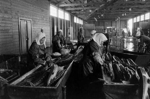 13 снимков фотографа из США, который приехал в СССР, чтобы снять добычу черной икры
