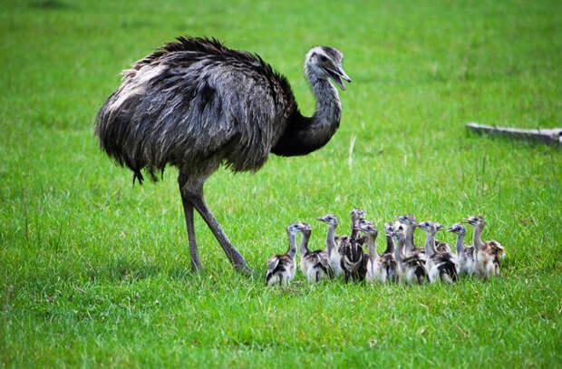 Лучшие отцы в мире животных