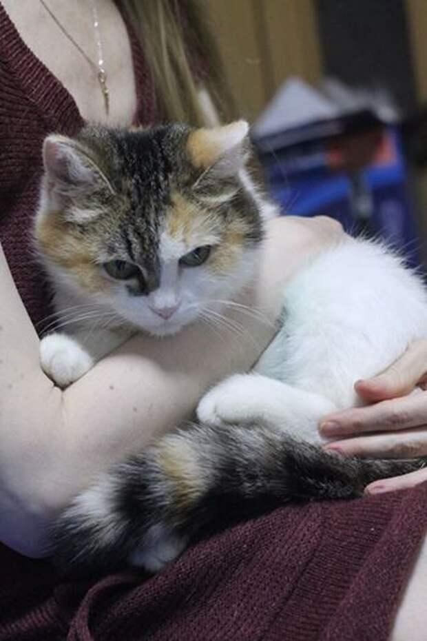 Волшебная кошка ищет свой дом)