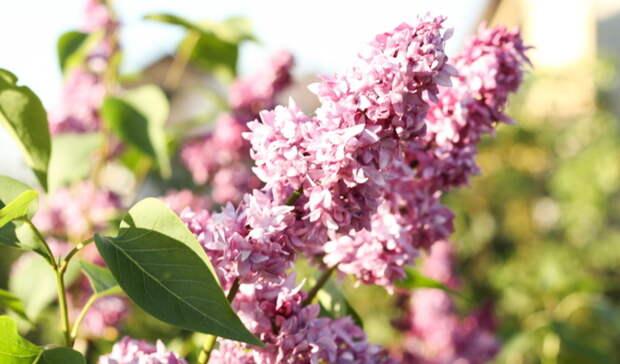 9 мая в Оренбуржье будет солнечно и тепло