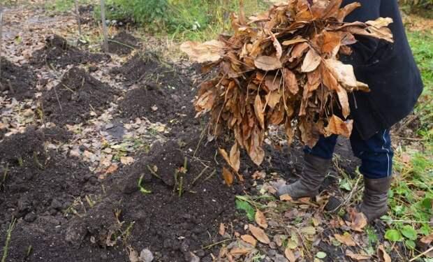 30 дел в саду, огороде и цветнике в ноябре