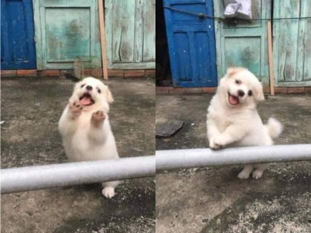 Животные, которые подарят вам отличное настроение