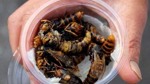 Жареные осы — деликатес японской кухни