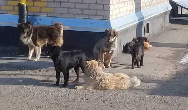 Растерзанная собаками женщина вСамаре была жительницей Бузулука