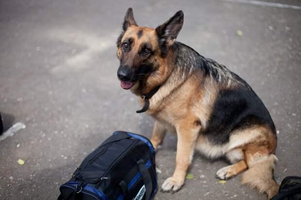 «Белка» против наркотиков: в Удмуртии служебная собака нашла у заключённого гашиш