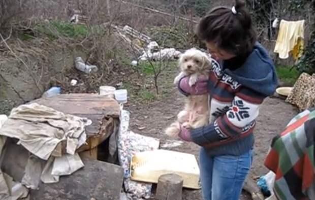 Ялта: спасение несчастных собак из бомжатника! Видео с места событий