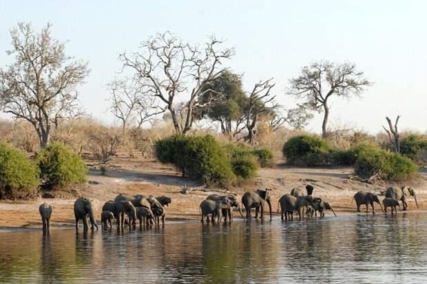 Ботсвана и Замбия отдых, путешествия, туризм, экология