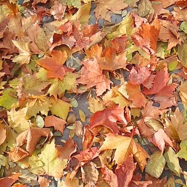 Осенний фэн-шуй и сухие растения