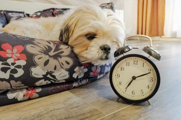 Собаки могут унюхать время вопросы, животные, земля, мир, планета, почему, факты