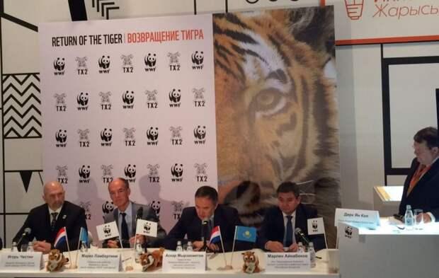 Тигры вернутся в казахстан спустя 70 лет после полного исчезновения