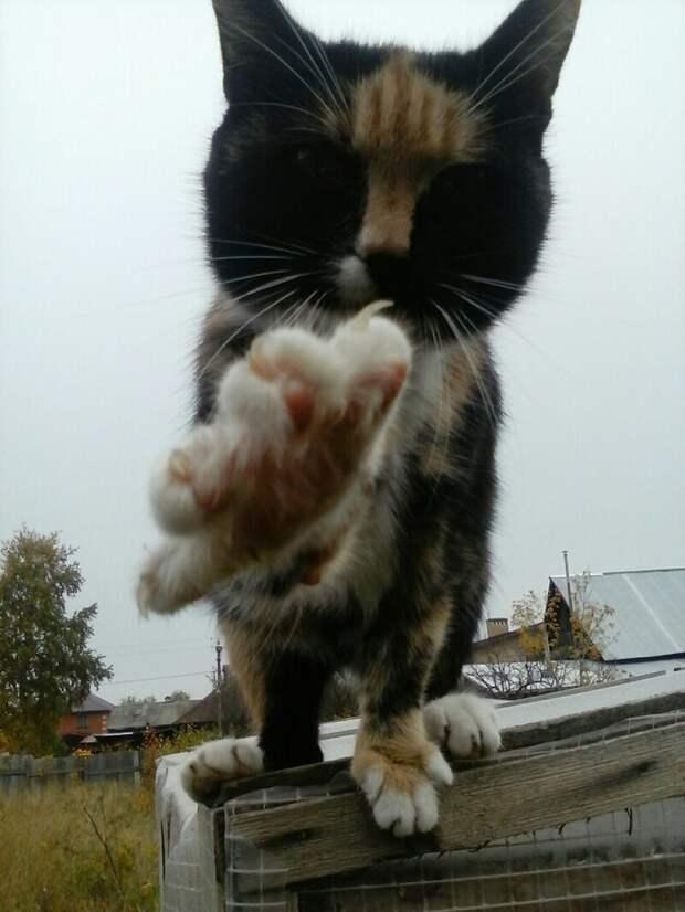 Не снимай! Хвостатые, братья наши меньшие, город, кот, кошка, улица, уличные кошки, эстетика
