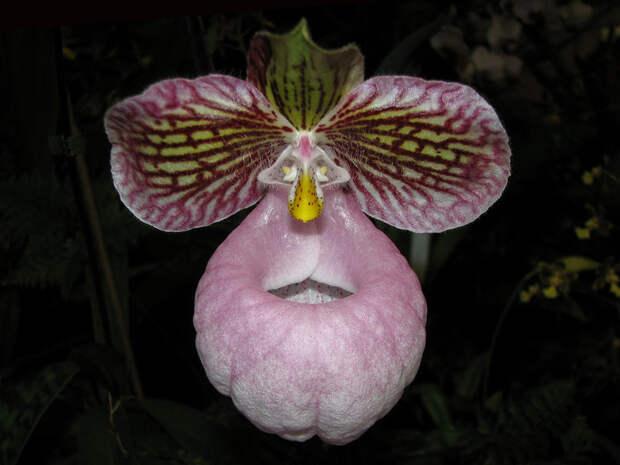 Вы не отведете от них взгляд, потому что они смотрят на вас интересное, красота, орхидеи, флора, цветы