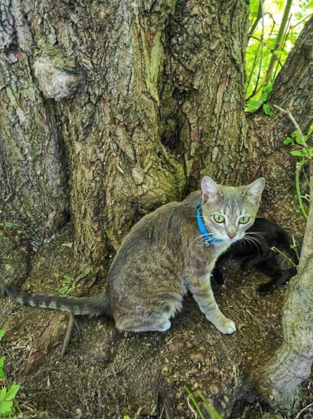 У кошечки от прежней жизни остались только мисочка, лежанка и котята…
