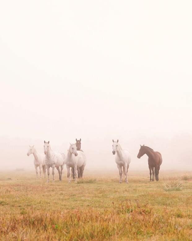 Замечательные снимки из путешествий Эрика Уорда