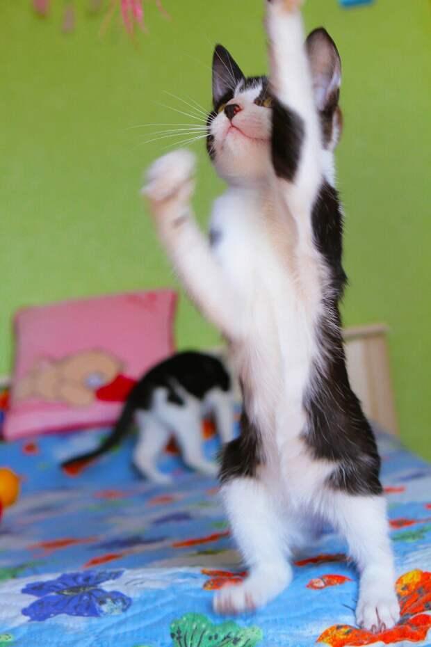 Котёнок-кенгурёнок мечтает поскорее запрыгнуть на ручки к хозяину!