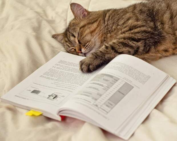 NewPix.ru - Кошка - домашнее чудо. Фотографии котов от memberx