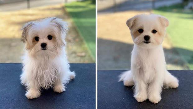 """Собаки """"до и после"""" посещения грумера"""