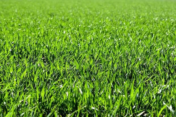 Почти 30 дворов благоустроят в Свиблове в этом году